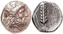 METAPONTUM , Nomos, 340-330 BC, Zeus Eleutherios head r/Corn grain, META at rt, crouching Silenos above leaf off flan; VF, sl unround flan, obv center...