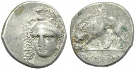 Lucania, Velia, Didrachm, c. 334-300 BC; AR (g 7,58; mm 21; h 5); Head of Athena facing, slightly l., wearing winged and crested Phrygian helmet; on h...