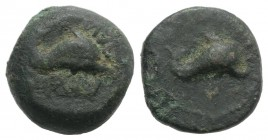 Northern Apulia, Salapia, c. 275-250 BC. Æ (12mm, 3.68g, 6h). Dolphin r. R/ Dolphin r. HNItaly 689; SNG ANS -. Scarce, green patina, Good Fine - near ...
