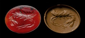 A roman carnelian intaglio. Shrimp. 