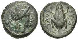 Northern Apulia, Luceria, Uncia, ca. 211-200 BC. AE (g 3,75; mm 15; h 4). Laureate head of Apollo r.; pellet behind; Rv. LOVCERI, Frog. HNItaly 682; S...