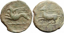 Sicily. Kainon. AE 22 mm, c. 365 BC. D/ Griffin springing left; below, exergual line. R/ Horse prancing left. CNS I, 1; SNG ANS 1173. AE. g. 6.50 mm. ...