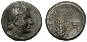 Lucania, Bronze, Metapontion, c. 300-250 BC AE (g 1,34 mm 11 h 9) Head of Pan r., wearing wreath, and with goat-skin tied round neck, Rv. META, barley...