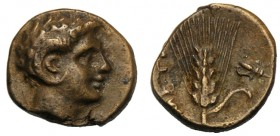 Lucania, Bronze, Metapontion, c. 300-250 BC AE (g 1,00 mm 10 h 8) Head of Apollo Carneius r., Rv. META, barley-ear with leaf to r. at r., fly. Johnsto...
