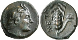 LUCANIA. Metapontion. Circa 300-250 BC. AE (Bronze, 12 mm, 1.71 g, 11 h). Head of Pan to right, wearing laurel wreath and a goat-skin tied around his ...