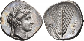 LUCANIA. Metapontum. Circa 340-330 BC. Nomos (Silver, 22 mm, 7.61 g, 11 h), struck under the magistrate Ph... Head of Demeter to right, wearing barley...
