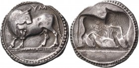 LUCANIA. Sybaris. Circa 550-510 BC. Stater (Silver, 27 mm, 7.89 g, 12 h). ΜV (retrograde) Bull standing to left on dotted ground line, his head turned...