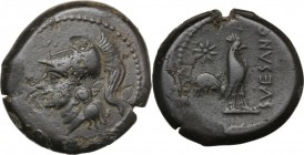 Greek Italy. Samnium, Southern Latium and Northern Campania, Suessa Aurunca. AE Litra, c. 270-240 BC. Head of Athena left, wearing crested Corinthian ...