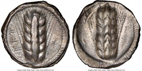 LUCANIA. Metapontum. Ca. 470-440 BC. AR stater (23mm, 7.40 gm, 12h). NGC Choice VF 4/5 - 3/5. MET, barley ear of seven grains; lizard to right / Incus...