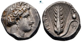 Lucania. Metapontion circa 340-330 BC. Stater AR