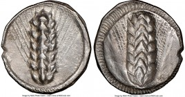 LUCANIA. Metapontum. Ca. 510-470 BC. AR stater (25mm, 12h). NGC XF, smoothing. META (on right, retrograde), barley ear with seven grains; guilloche bo...