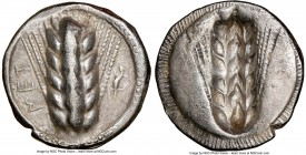 LUCANIA. Metapontum. Ca. 470-440 BC. AR stater (22mm, 12h). NGC Choice VF. MET, barley ear of seven grains; lizard to right / Incuse of barley ear. No...