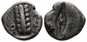 Lucania. Metapontion circa 510-460 BC. Obol AR