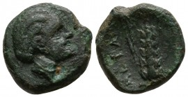 Lucania. Metapontion circa 400-200 BC. Bronze Æ