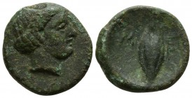 Lucania. Metapontion circa 320-300 BC. Bronze Æ