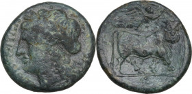 Greek Italy. Samnium, Southern Latium and Northern Campania, Compulteria. AE 18 mm, 265-240 BC. Obv. 'kumpulterum' (in Oscan) Laureate head of Apollo ...