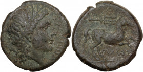 Greek Italy. Northern Apulia, Salapia. AE 20 mm, 225-210 BC. Obv. Head of Apollo right, laureate. Rev. Horse walking right; above, trident. HN Italy 6...
