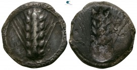 Lucania. Metapontion circa 510-470 BC. Stater AR