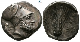 Lucania. Metapontion. ΑΠΗ- (Ape-), ΑΜΙ- (Ami-), magistrates 340-330 BC. Distater AR