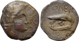SKYTHIA. Olbia. Ae (Circa 330 BC). Phy-, magistrate.