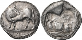 LUCANIA. Sybaris. Circa 550-510 BC. Stater (Silver, 30 mm, 7.99 g, 12 h). ΜV (retrograde) Bull standing to left on dotted ground line, his head turned...