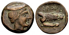 Kingdom of Macedon, Aeropos. 398/7-395/4 BC. Æ chalkous, 2.01 g. Male head wearing petasos right / [Α]ΕΡΟΠΟ forepart of lion right. SNG Alpha Bank 173...