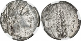 LUCANIA. Metapontum. Ca. 340-330 BC. AR stater (20mm, 7.66 gm 8h). NGC AU 5/5 - 4/5, Fine Style. Head of Demeter right, wearing wreath of grain / META...