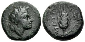LUCANIA. Metapontum. Circa 300-250 BC. (Bronze, 11 mm, 1.45 g, 4 h). Ivy-wreathed head of Dionysos to right. Rev. META Ear of barley with leaf to righ...