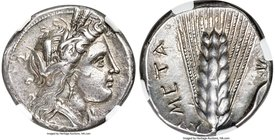 LUCANIA. Metapontum. Ca. 330-280 BC. AR stater or didrachm (21mm, 7.74 gm, 8h). NGC AU 5/5 - 4/5. Head of Demeter right, wreathed with barley ears / M...