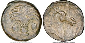 ZEUGITANA. Carthage. Ca. late 4th century BC. AE (18mm, 9h). NGC Choice VF, lt. smoothing. Sicilian mint (?), ca. 350-300 BC. Palm tree with two date ...