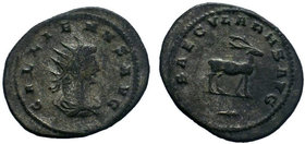 GALLIENUS. 253-268 AD. Antoninianus. Antioch mint. Struck 264-266 AD. GALLIENVS AVG, radiate, draped, and cuirassed bust right, seen from behind / SAE...