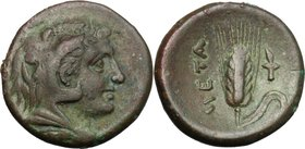 Greek Italy. Southern Lucania, Metapontum. AE 15.5, c.300-250. D/ Head of Herakles right, beardless and wearing lion-skin. R/ Barley-ear with leaf to ...