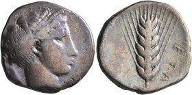 LUCANIA. Metapontion. Circa 430-400 BC. Didrachm or Nomos (Silver, 22 mm, 7.53 g, 12 h). Head of Demeter to right, her hair bound in fillet. Rev. META...