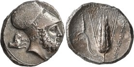 LUCANIA. Metapontion. Circa 340-330 BC. Distater (Silver, 27 mm, 15.66 g, 2 h). Bearded head of Leukippos to right, wearing Corinthian helmet decorate...
