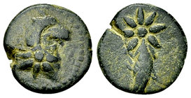 Pontos AE12, uncertain mint 