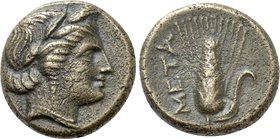 LUCANIA. Metapontion. Ae (Circa 300-250 BC).
