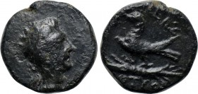 KINGS OF THRACE. Odrysian (Astaian). Kotys IV (Circa 171-167 BC). Ae.